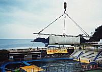 避難が終了し もとのプールへ越前松島水族館