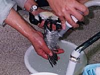 洗剤が残らない様にていねいにすすぎをする。