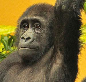 野生動物保護のための募金趣意書